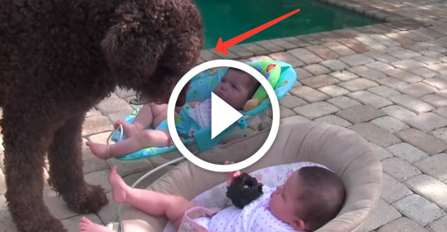 собака просит близнецов поиграть с ней