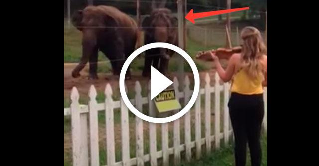 слоны танцуют под музыку Баха