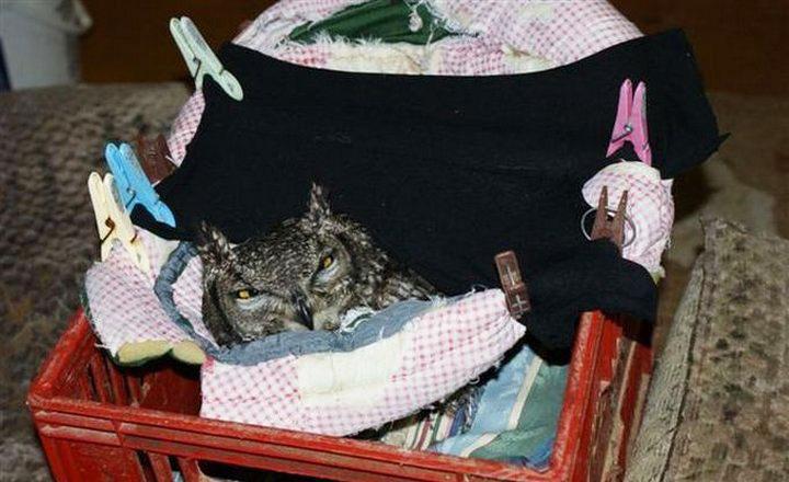 парень спас раненую сову