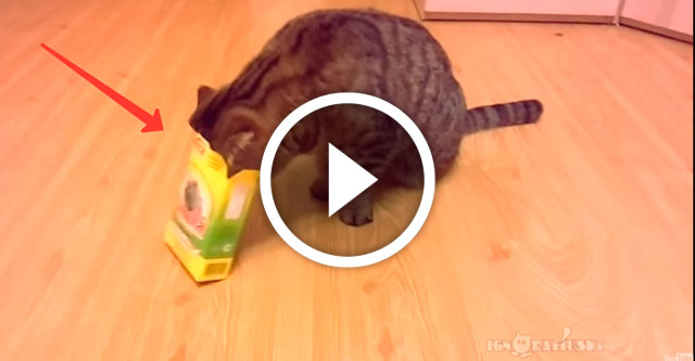 самоупаковывающиеся коты