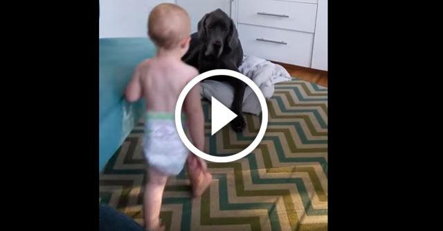 малыш и пес