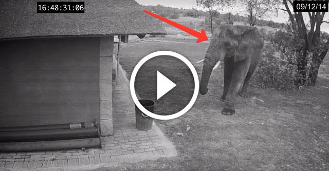 Слон выбрасывает мусор