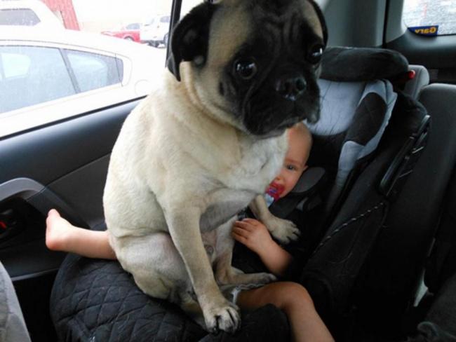 15 собак, которые плевать хотели на ваше личное пространство