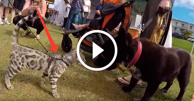 Кот на собачьей выставке