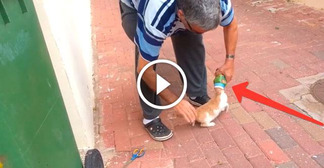 Котенок застрял в бутылке