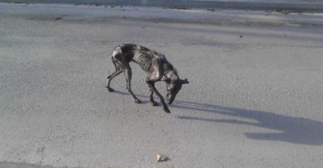 Спасение умирающего пса