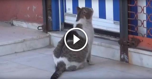 Беременная кошка попросила помощи