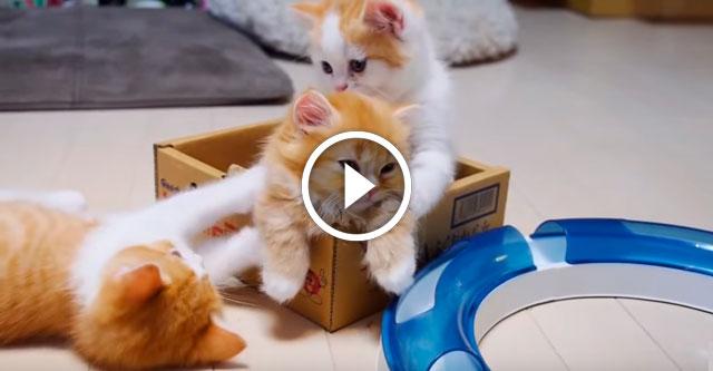 Играющие котята