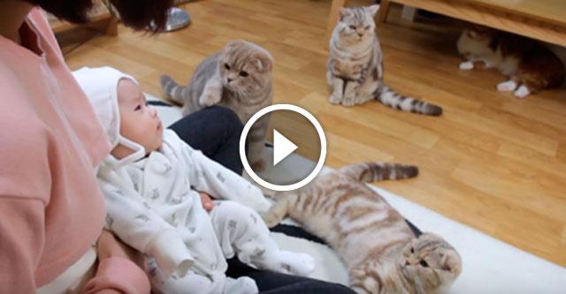 Котятам показали малыша
