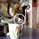 Пес в шоке от наглости кота