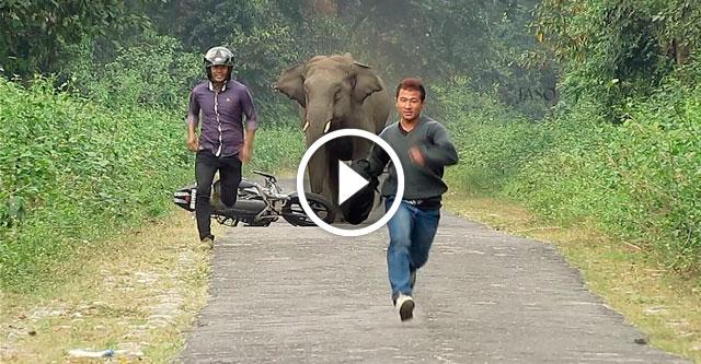Слон никого не пропускает