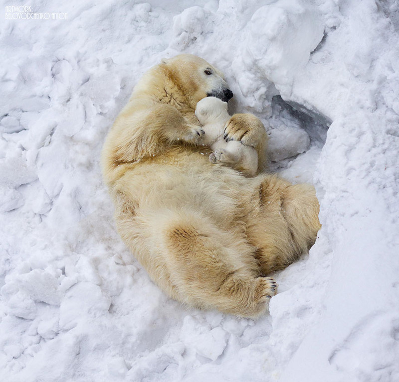 25 моментов, когда животные-родители повели себя совсем как люди животные, милота, родители и дети
