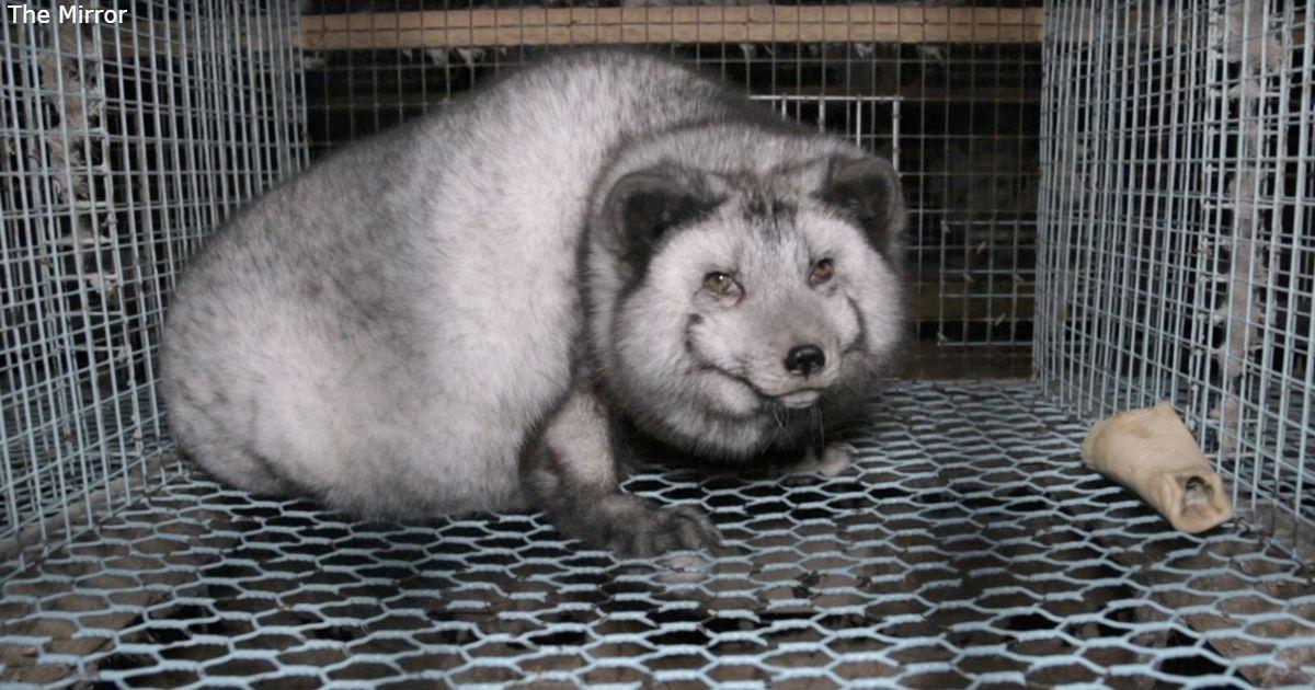 В Украине запрещают зверофермы, где животных разводят ради меха
