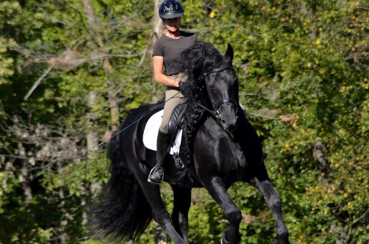 Самый красивый конь в мире Фредерик Великий