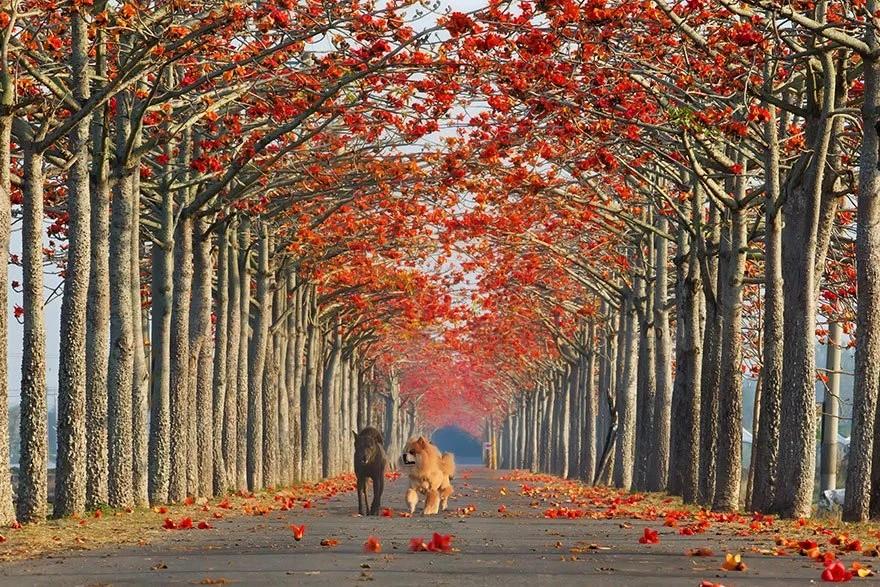 них необычные картинки аллея красные деревья фото, демонстрирующем, как