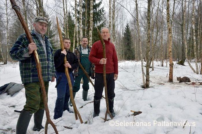 Обычные люди решились пойти в лес, чтобы спасти дикую рысь, попавшую в петлю