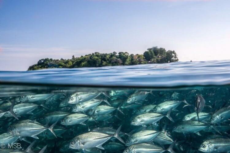 14 фотографий водных жителей, которые отобьют у вас охоту нырять!