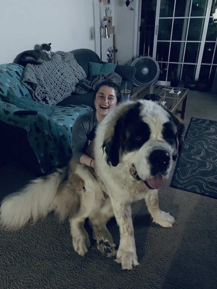 Хотели собаку, а получили гиганта, размером Лошадь (20 фото)