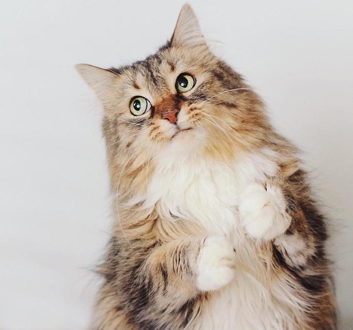 19 фото, после просмотра которых вы люди хотят завести кота