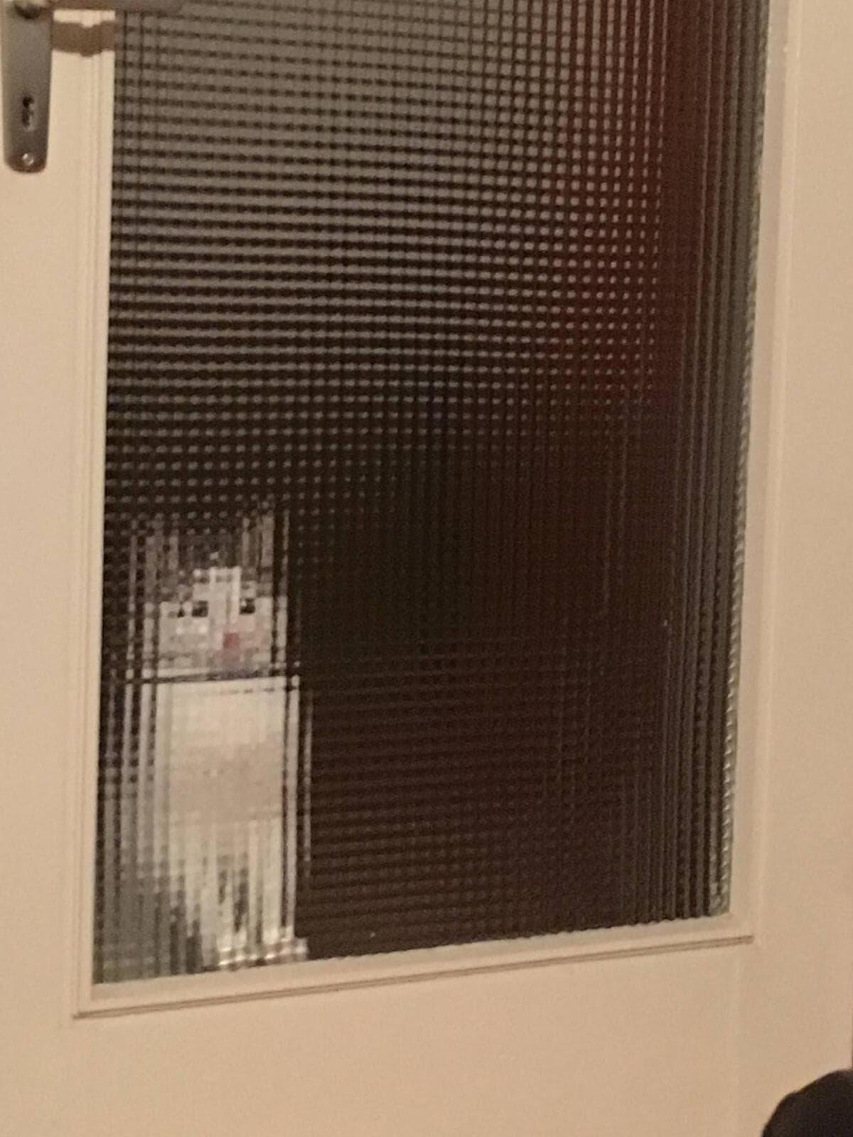 15 котов за стеклом, которые выглядят, как произведения искусства