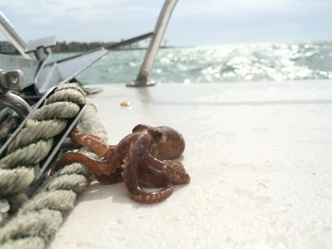 Милые снимки животных, которые дарят море позитива!