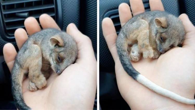 Мужчина спас замерзающего крошечного зверька: трогательное зрелище