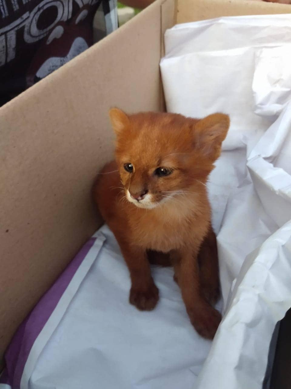 Девушка приютила котёночка, но котик оказался с секретом…