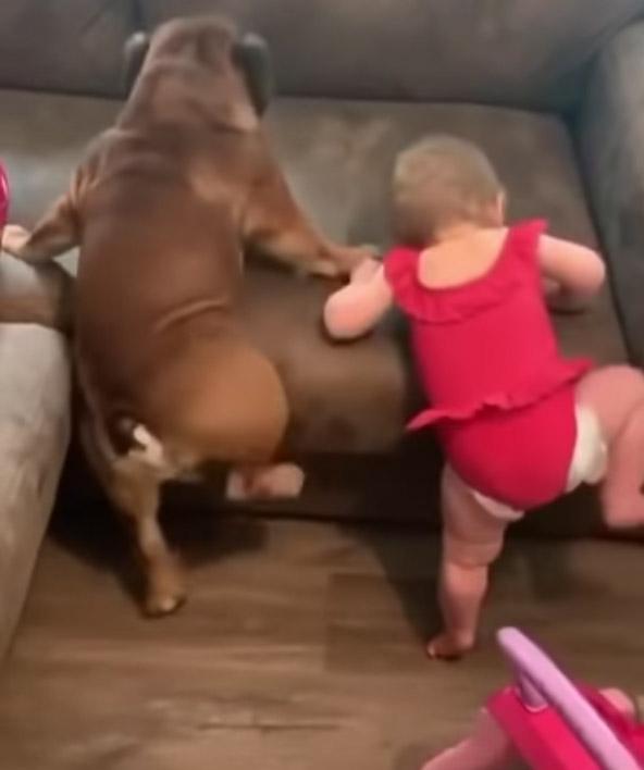 Эти забавные малыши пытаются покорить диван. Очень смешное видео!