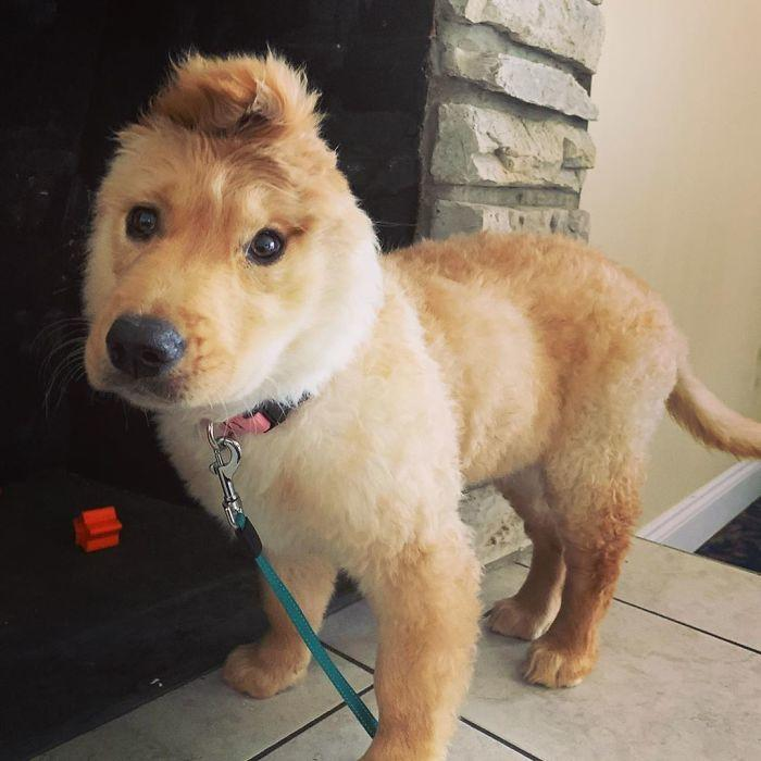 Очаровательный щенок-единорог своим внешним видом покоряет Интернет
