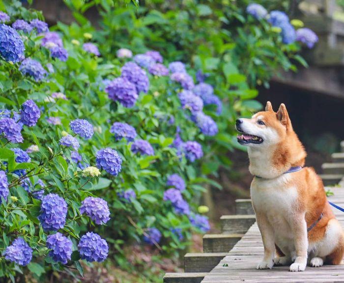Эти фотографии можно рассматривать вечно! Фотограф из Японии отлично передает всю красоту местного парка с помощью своей собаки