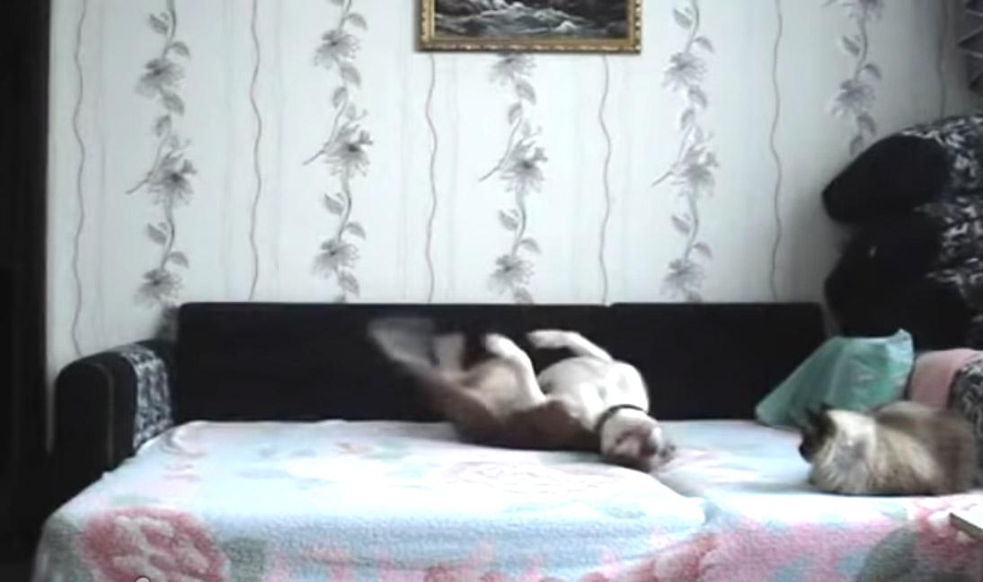 Этот хитрый пес дождался пока хозяйка уйдет из дому и «оторвался» по полной