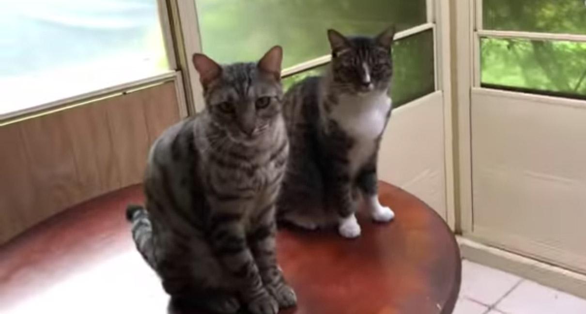 Когда твой друг — ябеда: кот сдал своего товарища с потрохами