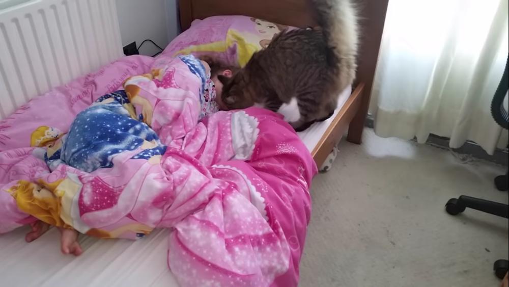 Лучший в мире будильник: Эта кошка каждое утро приходит будить свою хозяйку в школу