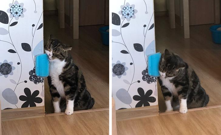 Если у Вас в доме есть кошка, возьмите себе на заметку эти лайфхаки