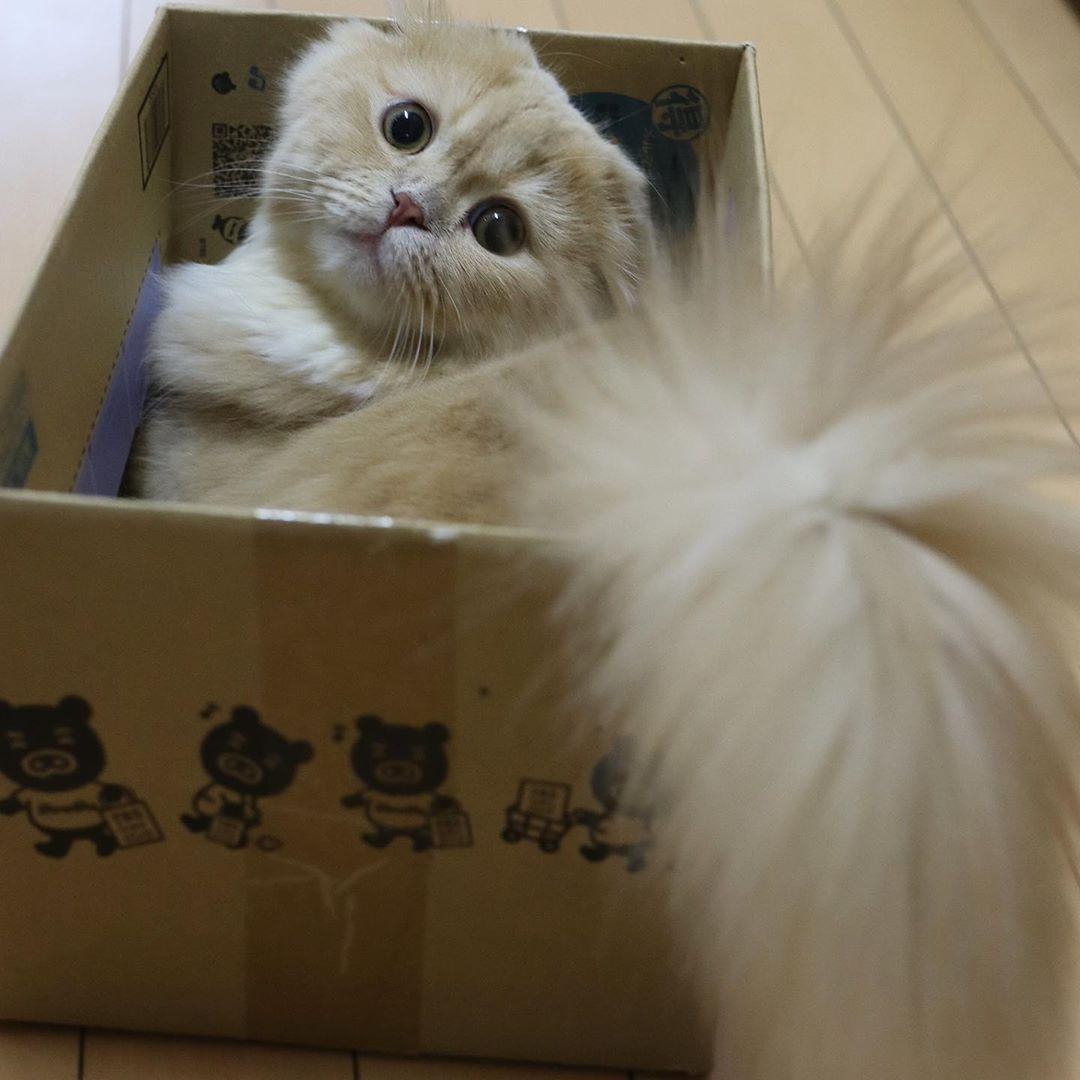 Кошечка Белль имеет самый шикарный хвост, почти как у белки