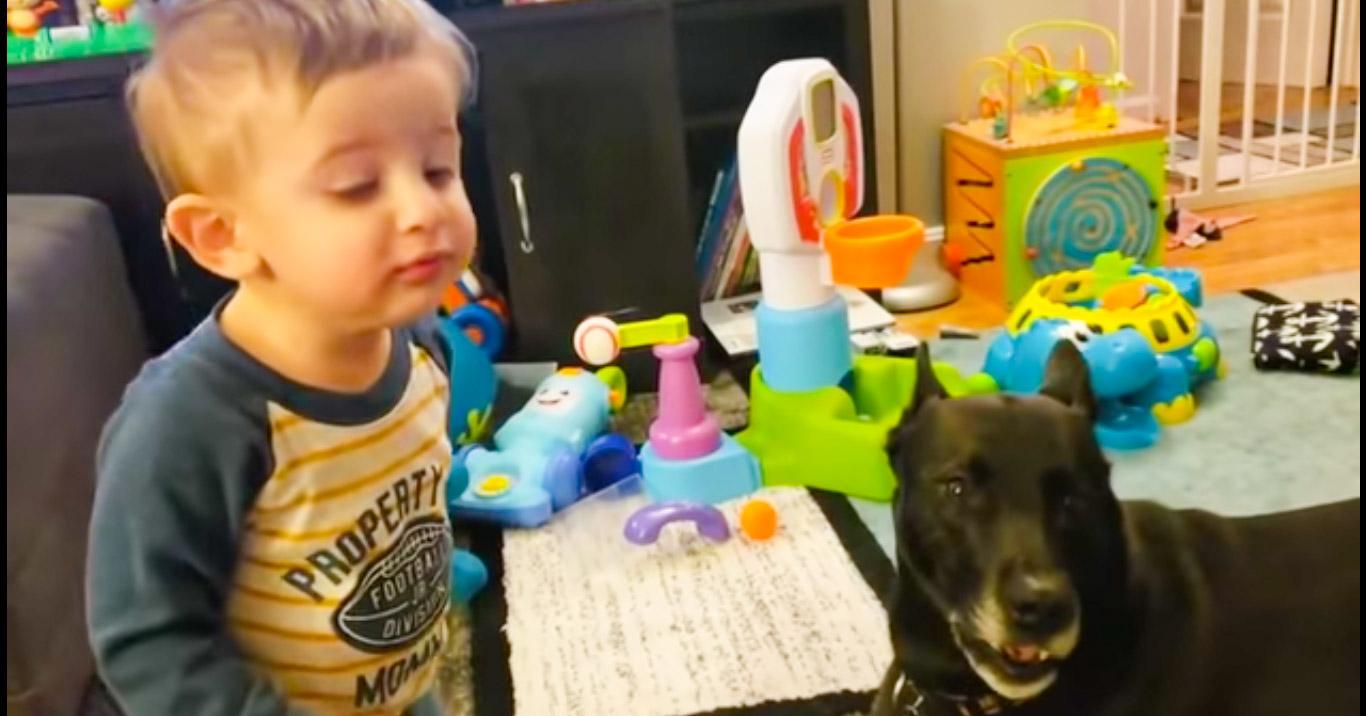 Когда есть о чем поговорить: мама записала забавный диалог сына с собакой