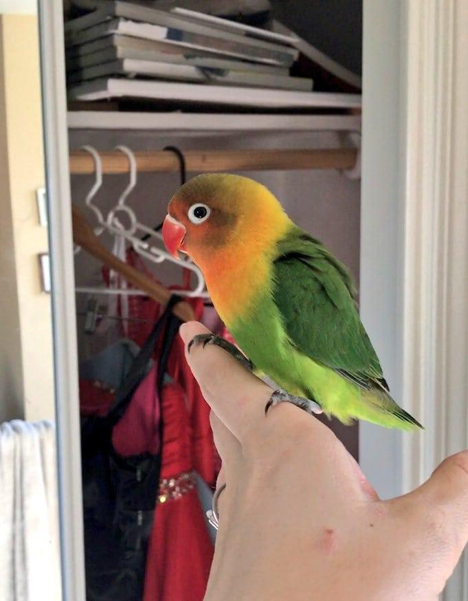 Яркий попугай и его необычная подружка стали стали родителями. Малыши оказались прелестней родителей