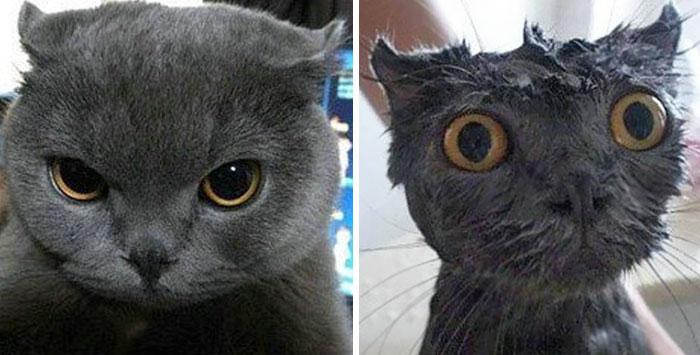 Наши самые любимые домашние животные до и после купания. На некоторых без улыбки не взглянешь