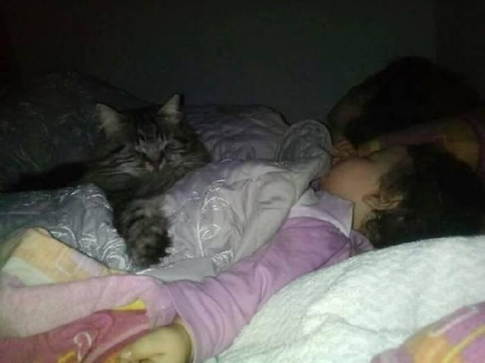 Пушистый нянь: огромный кот прибился на ферму и стал настоящим другом для новорожденной малышки