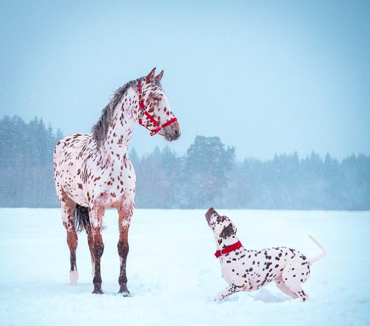 10 пар животных, которые по чистой случайности внешне очень похожи