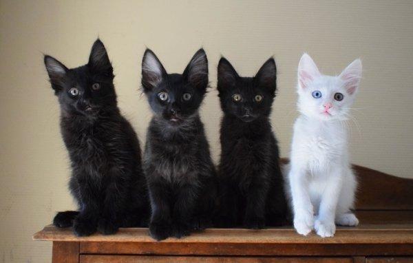 Самые необычные окрасы котиков