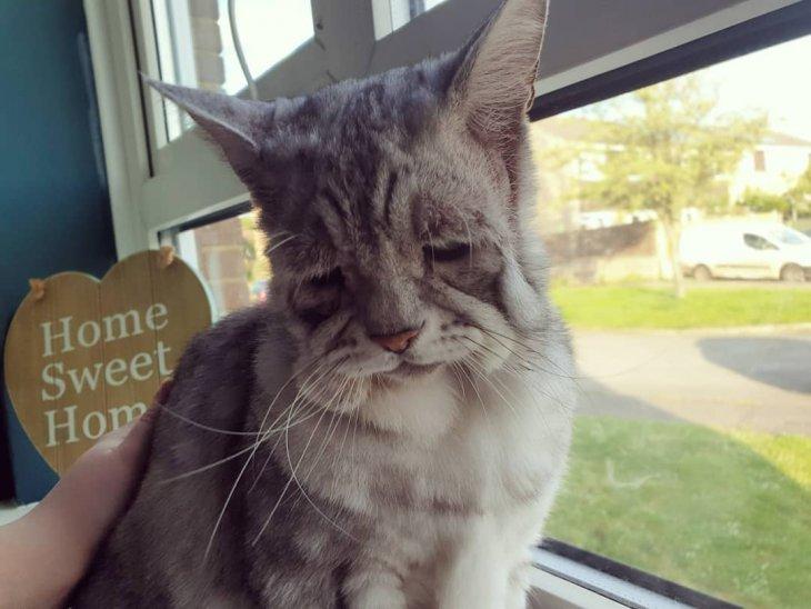 С виду это самый грустный кот, но внешность обманчива