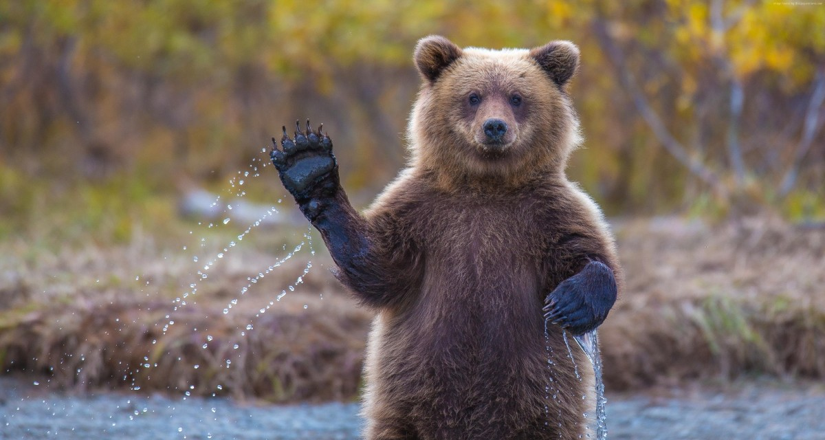 Мужчина показал как изнутри выглядит берлога медведя