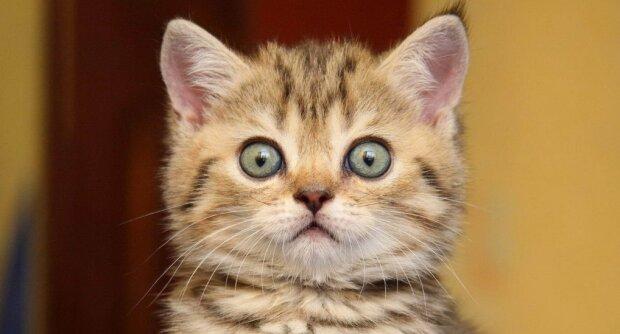 Котенок очень смешно отреагировал на храп хозяина. Забавное видео