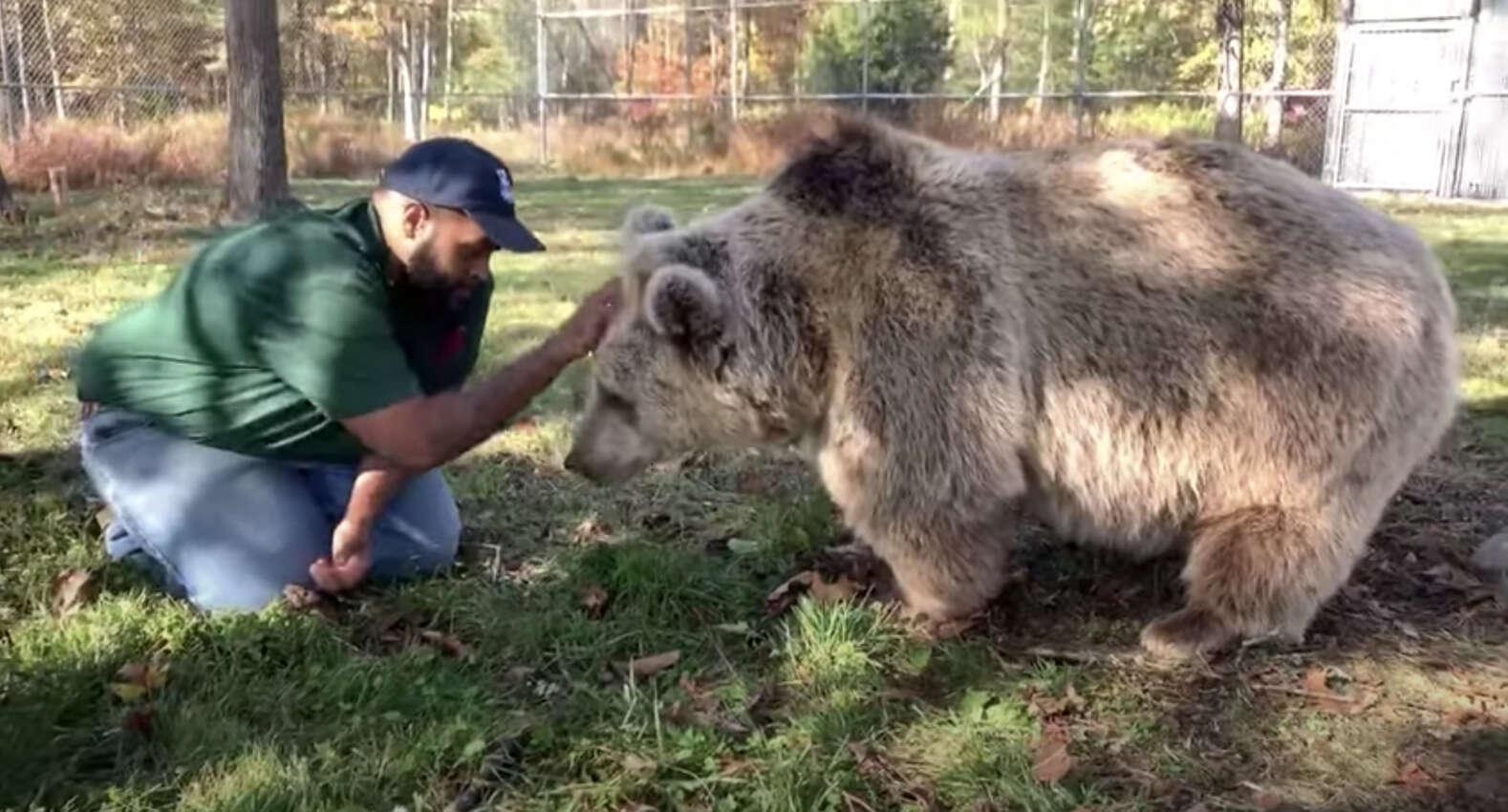 Супружеская пара спасает медвежат-сирот и выхаживают их как собственных детей