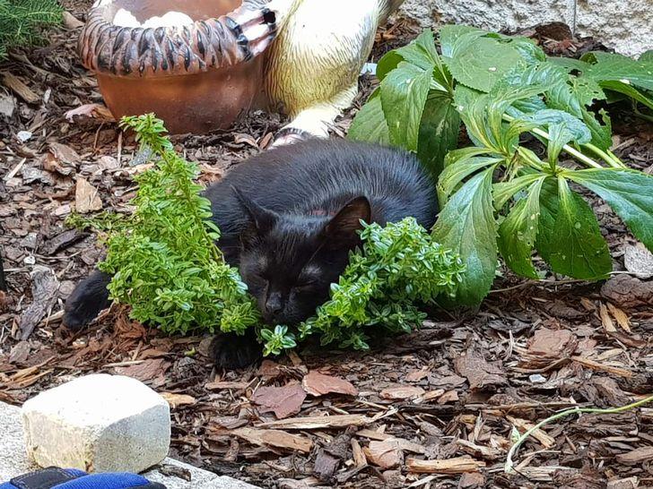 Когда твой кот — заядлый охотник: подборка очень милых и веселых фотографий с домашними любимцами