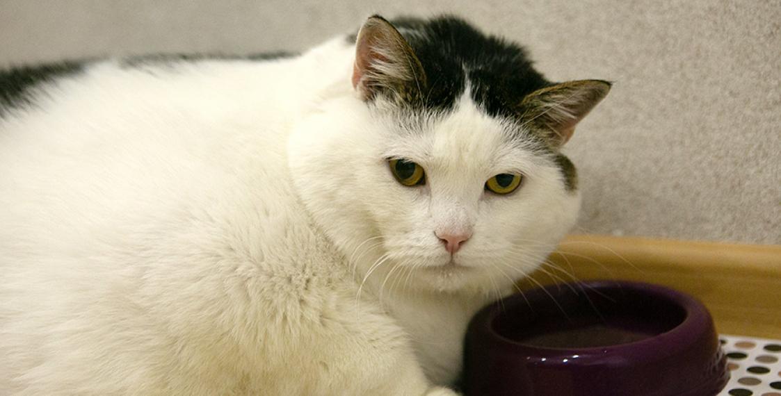 Упитанный малыш: самый толстый кот Беларуси весит 19,6 килограмм