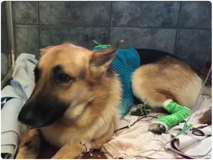 Когда пес увидел, что случилось с его маленькой хозяйкой, ничто не могло его удержать изоражения