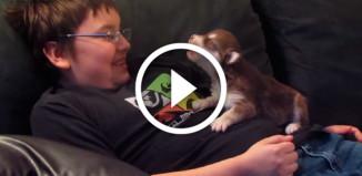 Уроки пения у маленького щенка