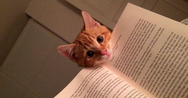 Книги и животные которые мешают читать